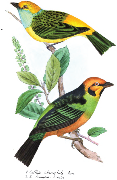 Watercolour illustration of two birds