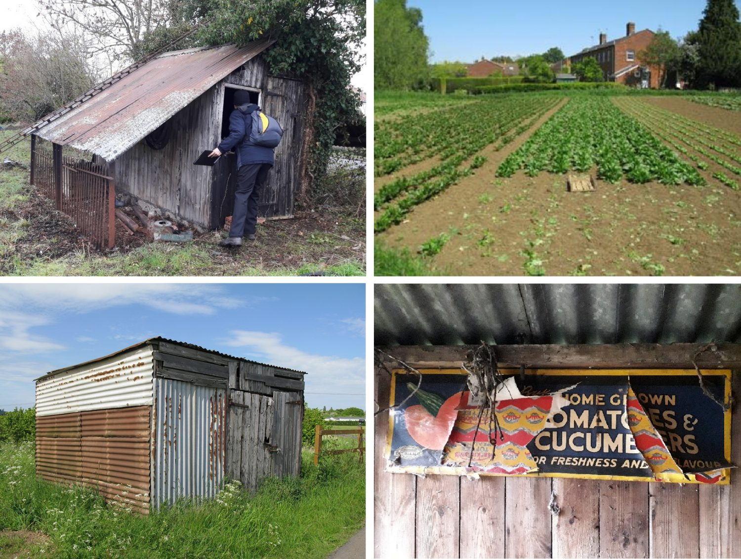 Four photos of market gardening within the Vale
