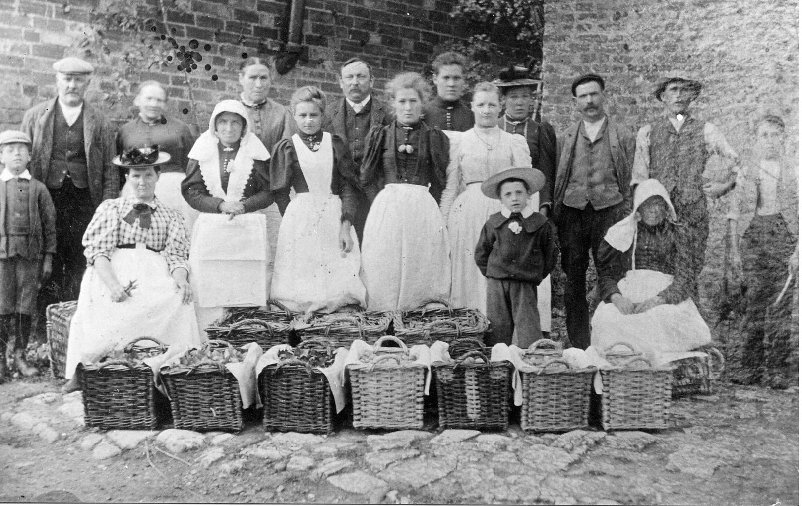 Market gardening produce - 1880