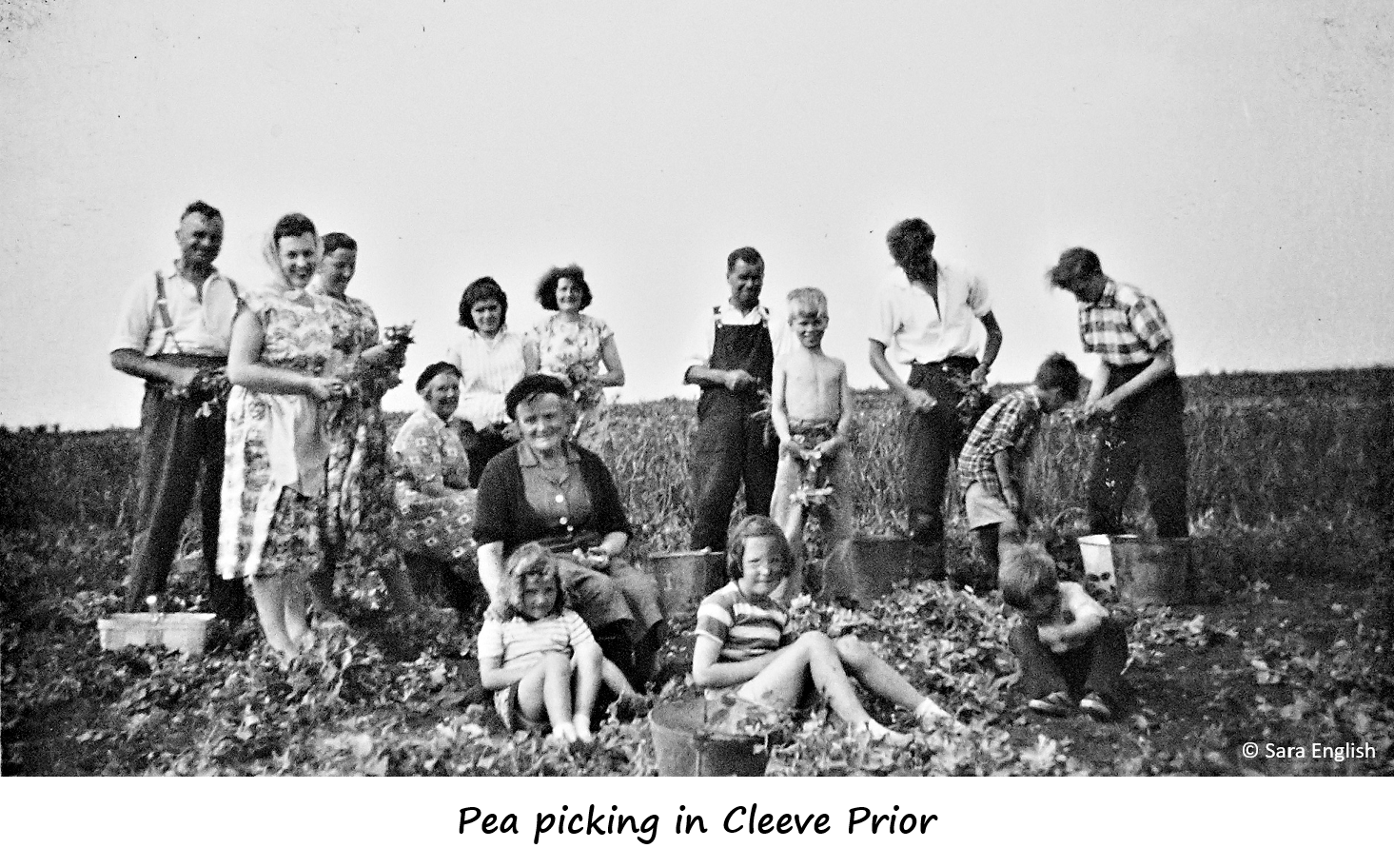 Extended family pea picking