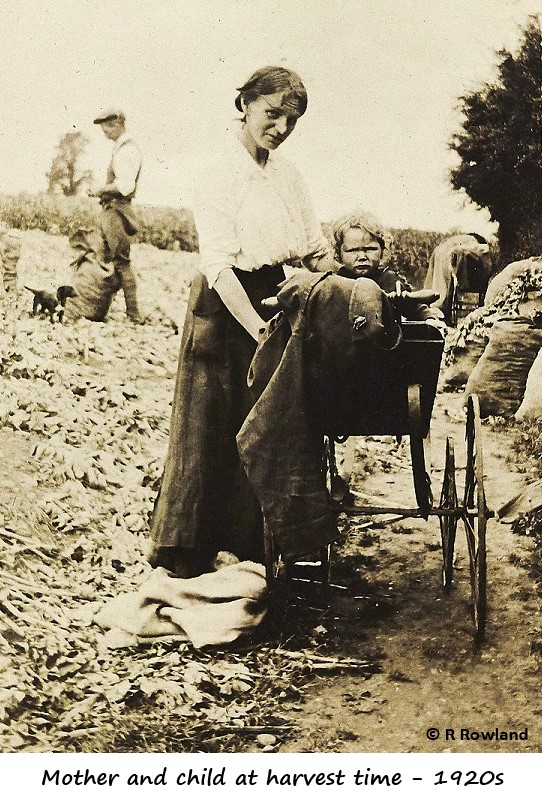 Mother with pram in harvest