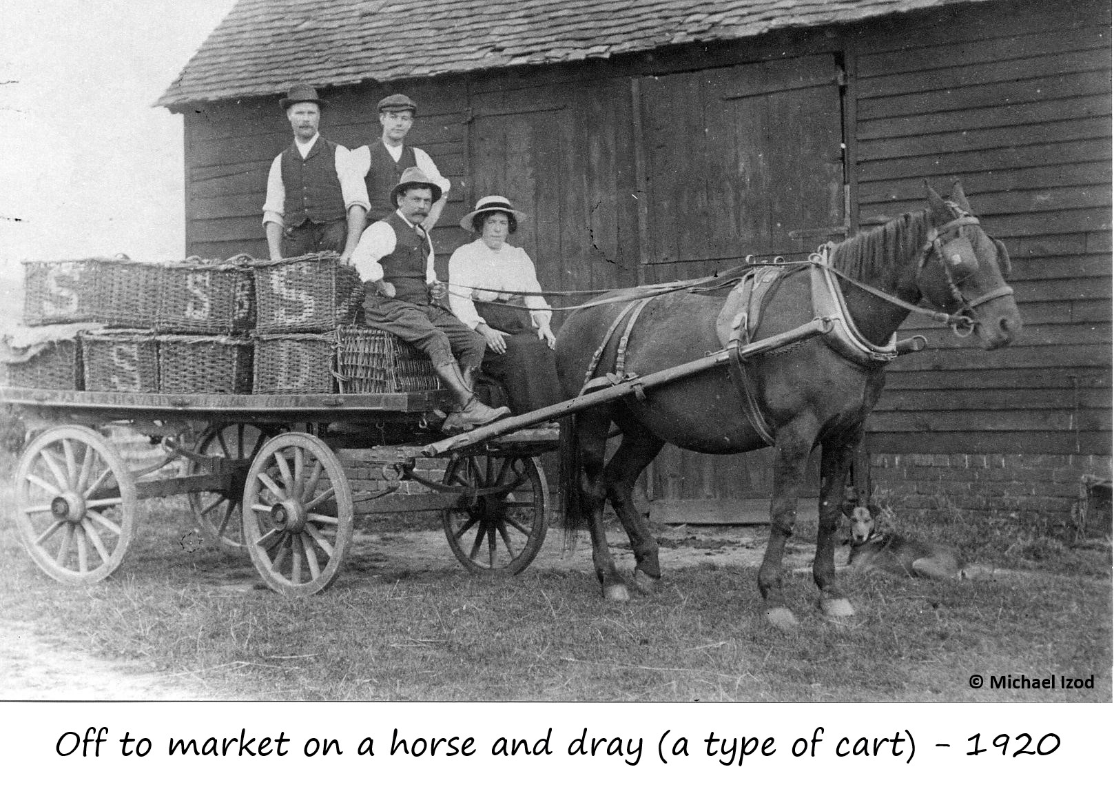 Off to market on horse and dray