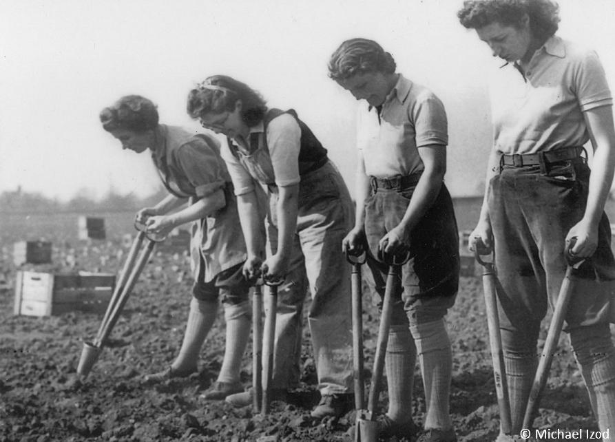 Line of land girls planting potatoes