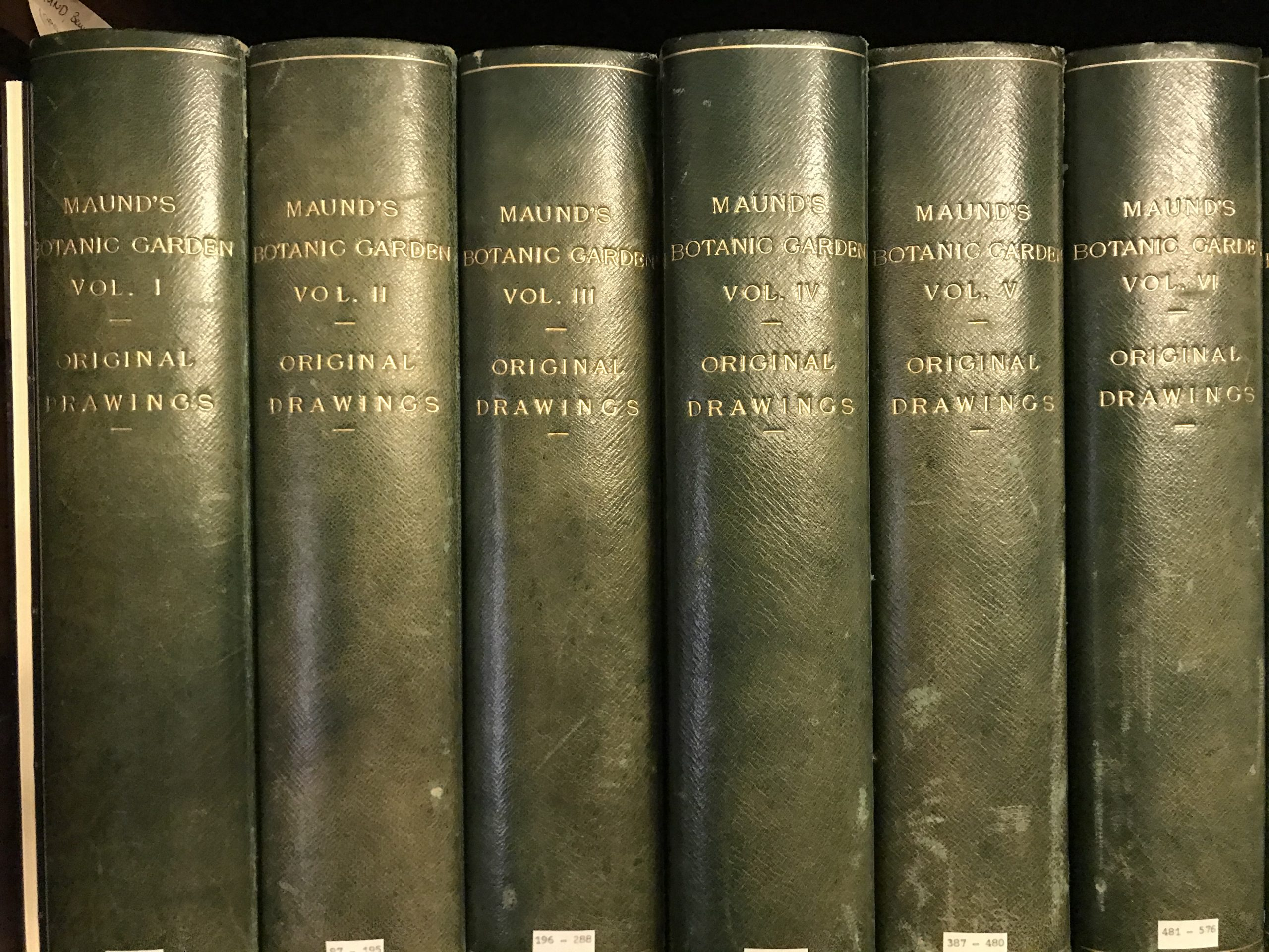 13 Volumes of Original watercolours from Maund's The Botanic Garden at NHM Library Special Collections Botany Drawings CUPD 12