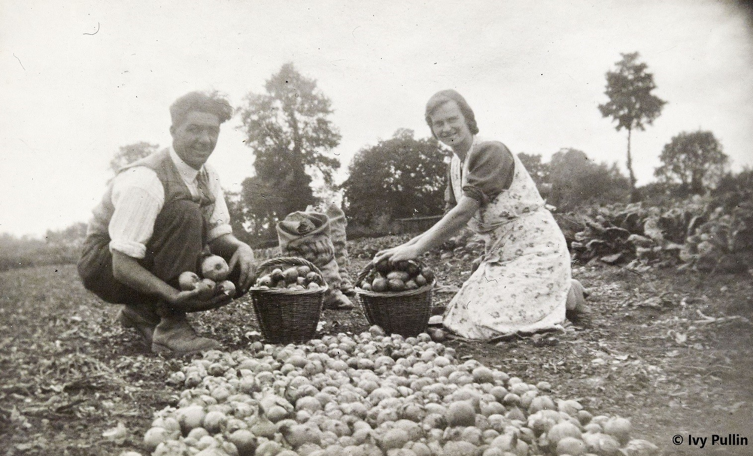 Couple packing onions into baskets