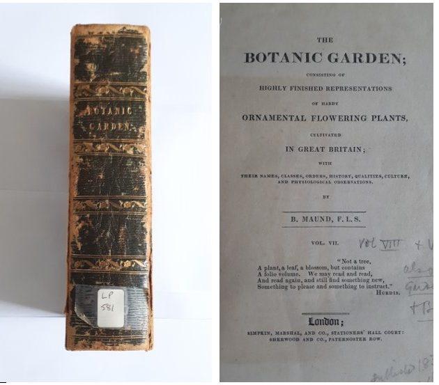Spine & Title page of Volume VII of Maund's The Botanic Garden at Ref LP 581