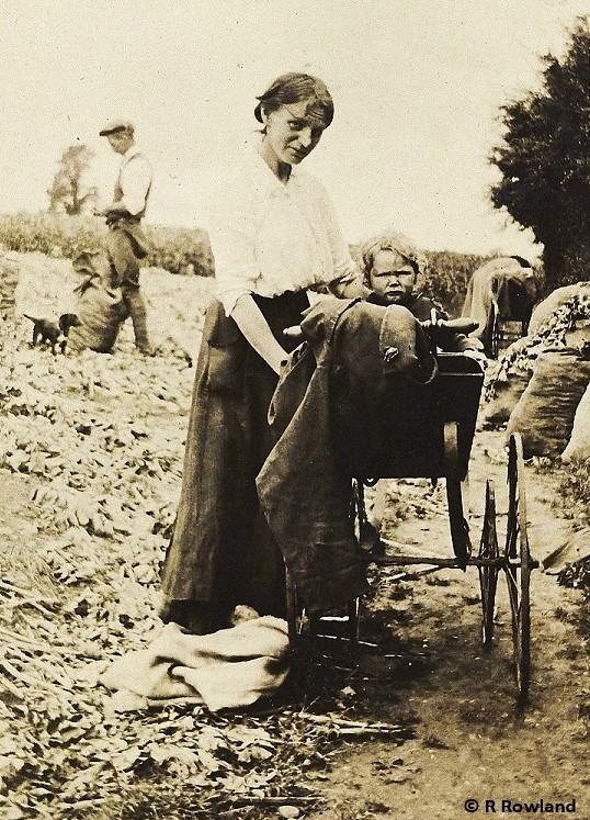 Mother with child in pram on edge of harvested field