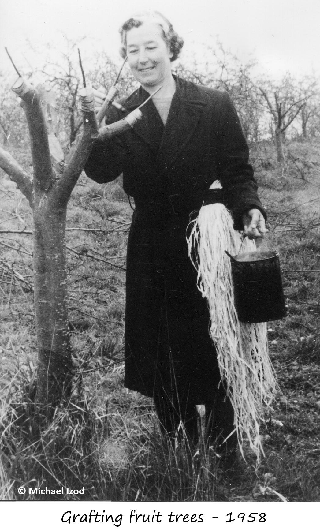 Woman grafting fruit trees 1958