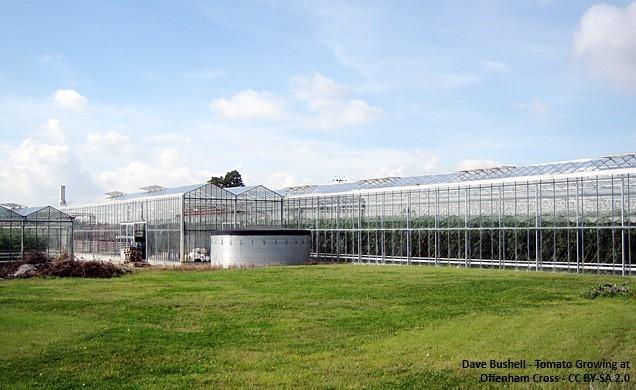 Offenham glasshouses
